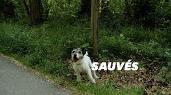 Malgré le confinement, la SPA a réussi à sauver des centaines d'animaux de
