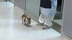 어미 고양이가 아픈 새끼를 물고 병원 응급실을