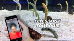 Passez un coup de fil aux anguilles de cet aquarium pour qu'elles n'oublient pas les