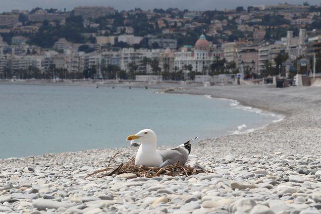 La plage déserte à Nice, le 27 avril