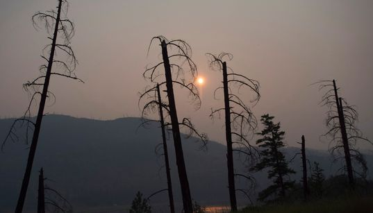 COVID-19 Complicates Wildfire Season In Western