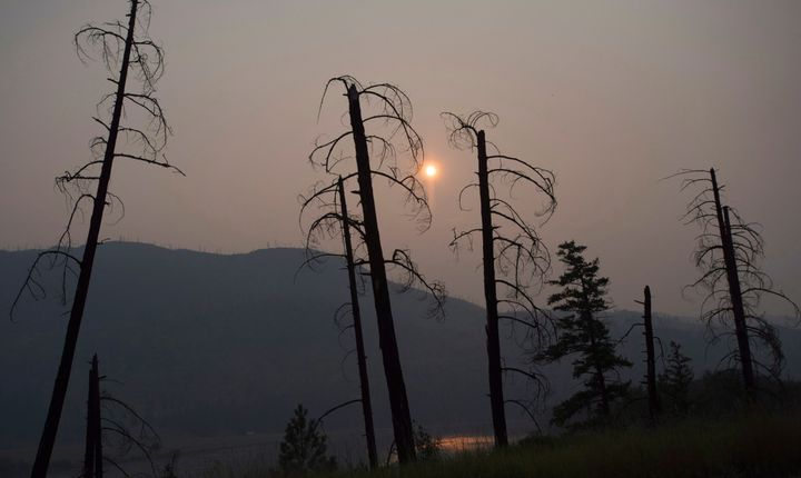 Burnt trees are pictured in front of a smoke-filled sky near Old Fort, B.C., on July 11, 2017.