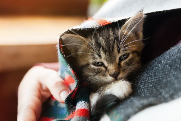 Coronavirus Sees Pet Scams Treble As Brits Are Sold Animals That Don't