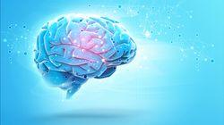 La importancia de la neurociencia en el