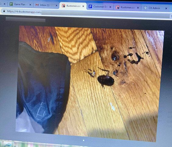 Former employees say customers regularly lashed out at them after receiving damaged and soiled garments. One woman reported finding a cockroach in her dress bag.
