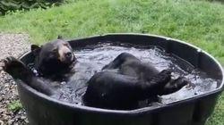 クマが、すっごく気持ちよさそうに風呂に浸かっているんですけど(動画)