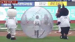 韓国プロ野球で、少年が巨大な風船に入って始球式。ソーシャルディスタンスな開幕を迎える