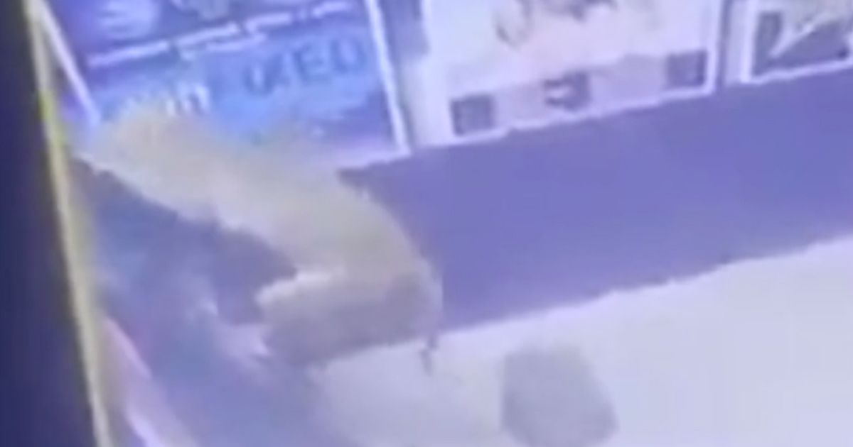 Monkey Breaks Into ATM, And The Surveillance Footage Is Bananas