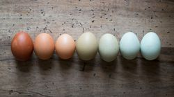 This Is How American Eggs Are Different From The Rest Of The