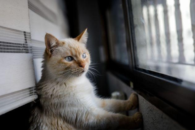 Imagen de un gato doméstico, fotografiado en Madrid el 8 de abril de 2020 (Jesús Hellín/Europa...