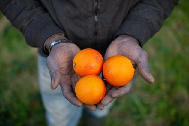 Regolarizzare i migranti solo per il raccolto è un atto d'egoismo. Che paese siamo