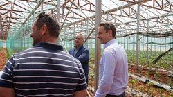 Μητσοτάκης: Στήριξη στην αγροτική παραγωγή - Αξιοποίηση και των ψηφιακών