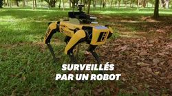 Ce robot fait respecter la distance sociale dans un parc de