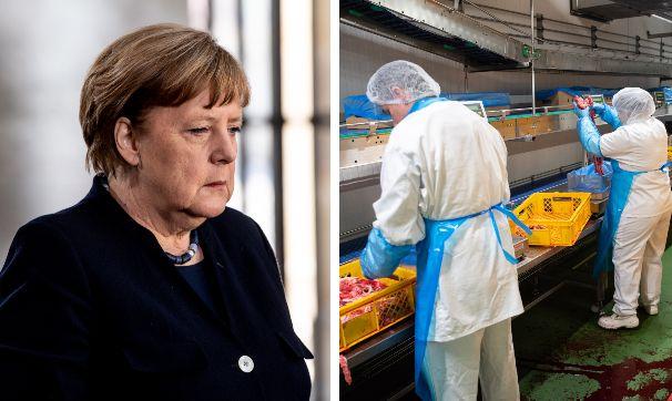 La cancelliera Merkel; un impianto di lavorazione carne in