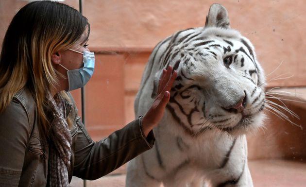 Φτηνό φαγητό και μοναξιά για τα ζώα σε ζωολογικό κήπο στο Κίεβο, λόγω