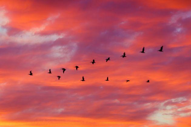 Un lenguaje que sólo los pájaros