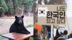 외국인들이 웃음기 쏙 빼고 한국의 마늘을 찾기
