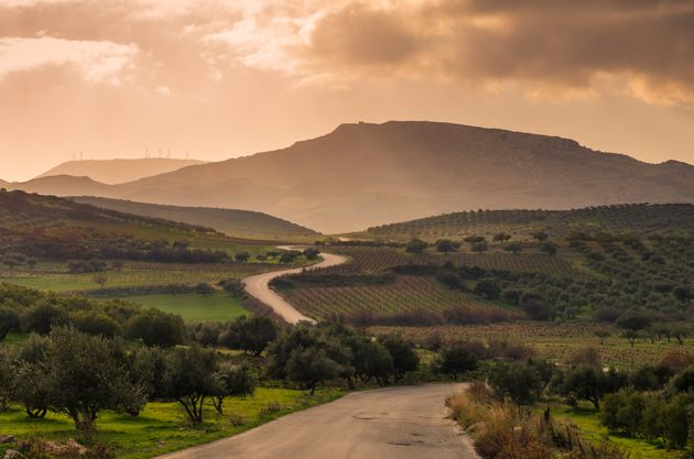 scenic view of cretan landscape at sunset.Typical for the region olive groves, olive fields, vineyard...