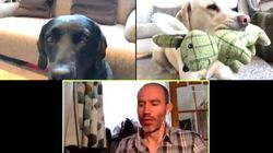 Quarantined Dogs On A Company Zoom Call Are Lockdown