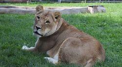 Recevez les animaux du Parc Safari dans votre