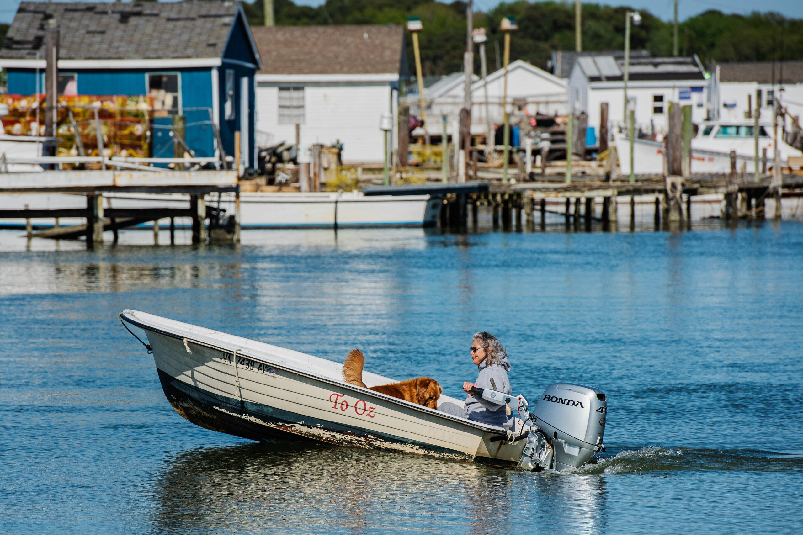 Carol Pruitt-Moore heads out on her skiff with her golden retriever, Progger from the harbor on Tangier Island earlier this m