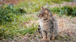 Polémique sur la chasse aux chats: la FNC dénonce les