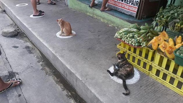 Κεζόν, Φιλιππίνες: Αδέσποτες...