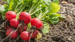 5 Vegetable Seeds You Can Plant Now To Enjoy In
