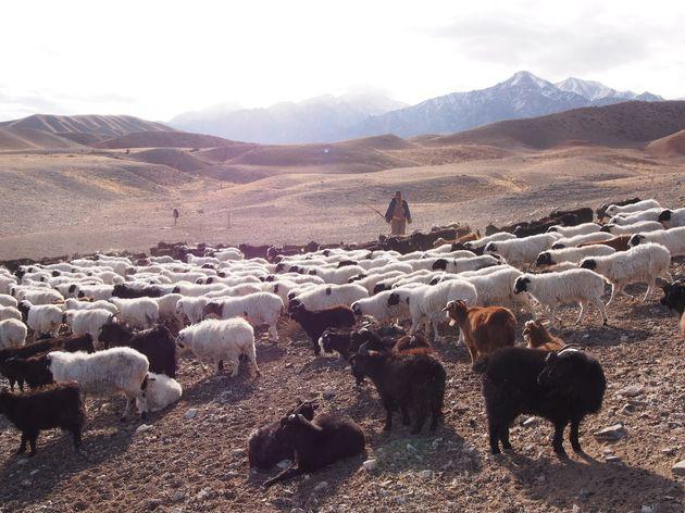(「家畜と遊牧民」モンゴルにて)
