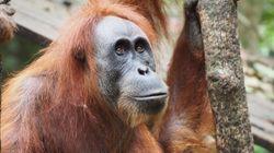 絶滅危惧種から考えるSDGs。サステナブルな地球環境のためにできる3つのこと
