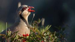 Τα πουλιά ενώνουν τον κόσμο