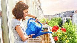 Τα καλύτερα φυτά και λουλούδια για να ανθίσει το μπαλκόνι