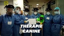 Ce petit chien allège le stress des soignants d'un hôpital de