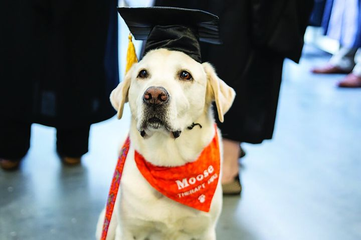 Moose, looking very distinguished in a graduation cap.
