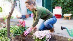 Πώς θα φτιάξουμε τον δικό μας κήπο στο