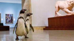 ペンギンたちが閉館中の美術館でアート鑑賞「モネよりカラヴァッジョが好きだったようです」