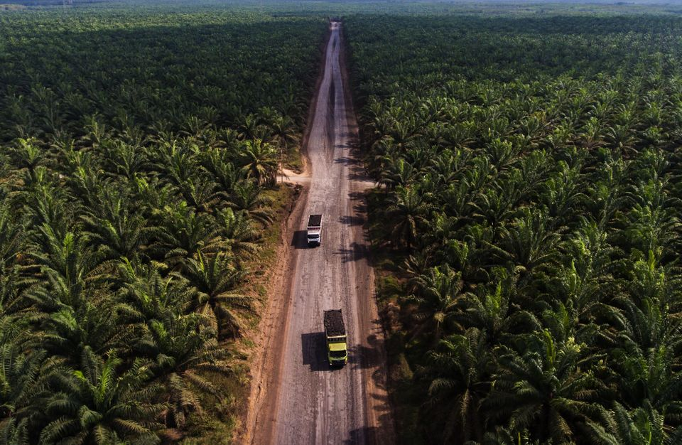 A large palm oil plantation in Indonesia. This incredibly biodiverse country lost about 289,000 acres...