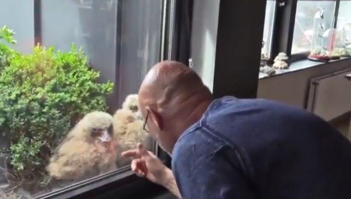 """조스가 새끼 수리부엉이들에게 """"얘들아 안녕?""""이라고 말을 걸고 있다."""