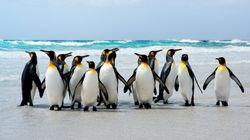 Οι πιγκουίνοι της Ανταρκτικής απελευθερώνουν αέριο γέλιου με τα κόπρανά