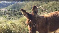 El vídeo que da la vuelta al mundo: la reacción de una burra tras dos meses sin ver a su