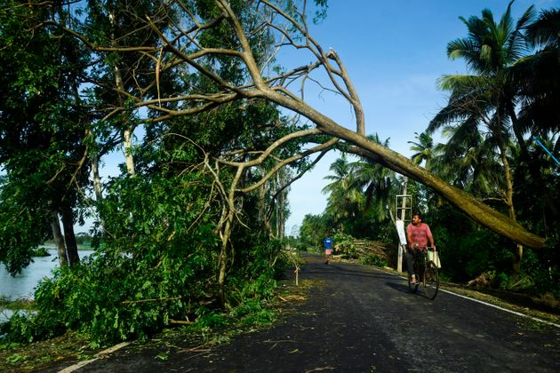 A man rides his bicycle under an uprooted tree after the landfall of cyclone Amphan in Midnapore, West...