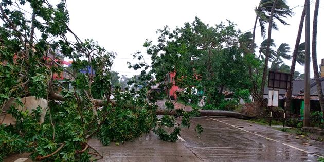 Trees lie uprooted on a highway from heavy winds ahead of Cyclone Amphan landfall, at Chandbali on the...
