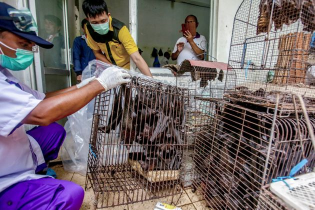 FILE - In this Saturday, March 14, 2020 file photo, health officials inspect bats to be confiscated and...