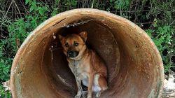 Δεκαεπτά σκυλιά αργοπέθαιναν αλυσοδεμένα σε παράνομο εκτροφείο στα