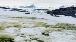 Al Polo Sud il ghiaccio sta diventando verde (ma non è una brutta