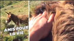 Réuni avec son âne après le confinement, il ne peut pas retenir ses