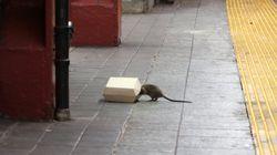 Alterazioni genetiche nei topi: a New York preferiscono la pizza, a Parigi i
