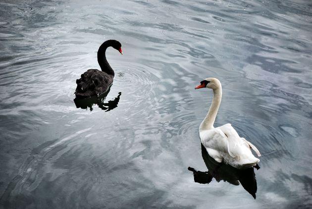 COVID-19: ¿cisne negro o cisne
