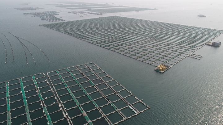 An aquaculture fishery in Qingdao, China.