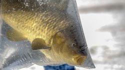 As Fishermen Flounder, Trump Clears A Path For Factory Farming The